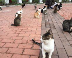 イスタンブール マチカ公園の猫たち