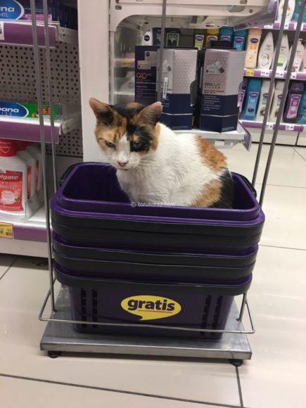 あり得ない場所にいるイスタンブールの店猫