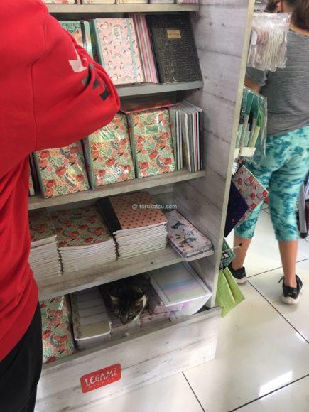 イスタンブールの店猫