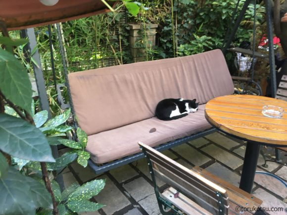 イスタンブールの猫