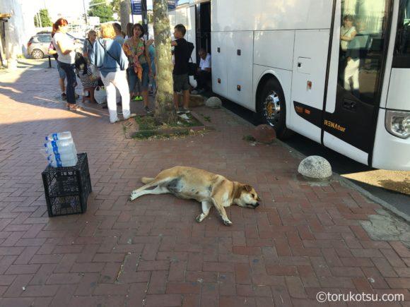 イスタンブールの犬
