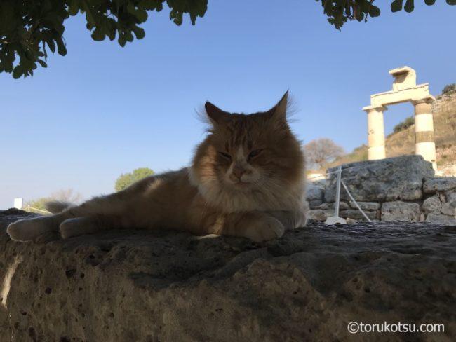 トルコ-エフェソス遺跡の猫たち